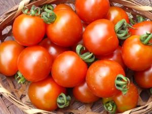 ミニトマト 健康な野菜は美しい